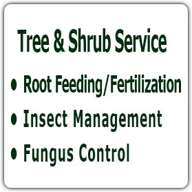 Tree & Shrub Service, Root Feeding/Fertilization, Insect Management, Fungus Control